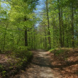 A photo of a forest road - Photo