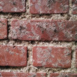 An extremely detailed photo of a brick wall - very sharp - Photo