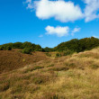 A photo hills covered with heather - Rebild National Park, Denmark - Photo