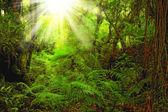 Una foto di una lussureggiante foresta pluviale — Foto Stock