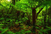 A photo of lush rain forest — Stock Photo