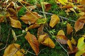 一张照片的秋天的颜色 — 图库照片