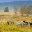 A photo of horses on a field in autumn colors — Stock Photo
