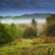 Landscape photo of mist an early morning — Stock Photo #19860783