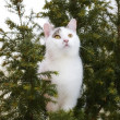 Royalty-Free Stock Photo: A photo of a white cat in a tree