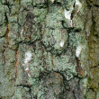 A photo of bark of a birch — Stock Photo