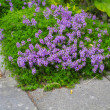 A photo of a flowerbed in garden — Stock Photo #19866187