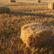 Royalty-Free Stock Photo: Harvest - a countryside photo in early sunset