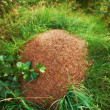 Stock Photo: Photo of busy anthill