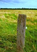 Fotografie plotového sloupku — Stock fotografie