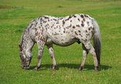 Bir atın üzerinde yeşil bir alana ait fotoğraf — Stok fotoğraf