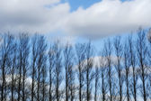 A photo of Bare trees in wintertime — Stock Photo