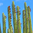 A photo of desert cactus - Stock Photo