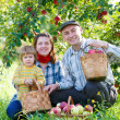 Happy family harvests of apples — Stock Photo