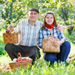 Happy couple in the garden harvests — Stock Photo #13613891