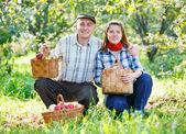 Счастливая пара в сад урожая — Стоковое фото