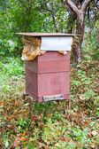 Bee hive in the garden — Stock Photo