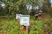 Bee hive in garden — Stock Photo