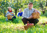 Group of people gathers apple harvest — Stock Photo