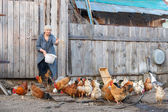 Feeding chickens on a farm — Stock fotografie