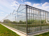 Greenhouse vegetable production — Stock Photo