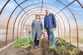 Man and woman in greenhouse — Stock Photo