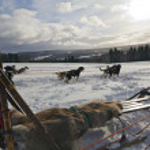 Sled dog racing — Stock Photo