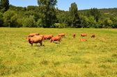 French lanscape in Dordogne — Stock Photo