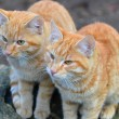 Two kittens in my backyard — Stock Photo #14979141