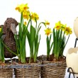 Easter eggs and daffodils — Stock Photo #33583567
