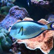 Tropical coral reef fish — Stock Photo
