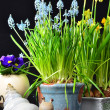 Easter flowers and snail — Stock Photo #34001495