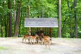 Herd of deers — Stockfoto