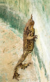 Large frog. — Stock Photo