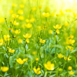 The flower of the Buttercup. — Stock Photo