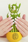 French oval manicure. — Stock Photo