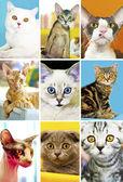 Cat show. — Stockfoto