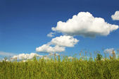 Summer weather with clouds. — Stock Photo