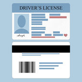 Drivers License — Stock Vector