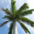 Palm Tree - Stock Photo