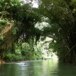 Stock Photo: MarthBrae River in Jamaica