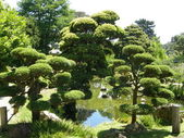 Japanese Tea Garden at the Golden Gate park — Stock Photo
