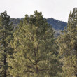 Foto Stock: Pines to Palms Scenic Byway