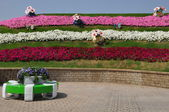 Dubai Miracle Garden in the UAE — Stock Photo