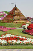 Dubai Miracle Garden in the UAE — Стоковое фото