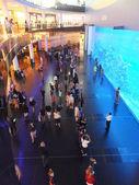 Aquarium at Dubai Mall in Dubai, UAE — Stock Photo