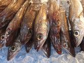 čerstvé ryby — Stock fotografie