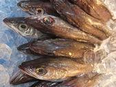 Pescado fresco — Foto de Stock