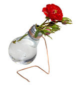 Bulb vase with roses — Stock Photo