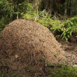 Anthill — Stock Photo #14281613